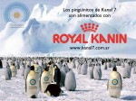Royal Canin » Royal Kanin